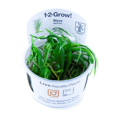 Blyxa_japonica_1-2-Grow_
