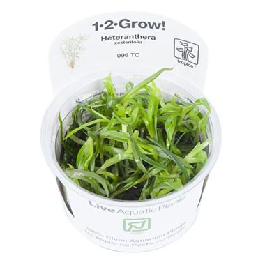 Heteranthera_zosterifolia_1-2-Grow_