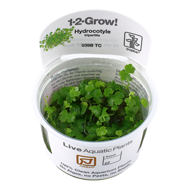 Hydrocotyle_tripartita_1-2-Grow_