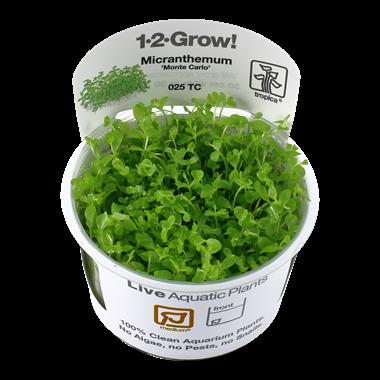 Micranthemum_Monte_Carlo_1-2_Grow_