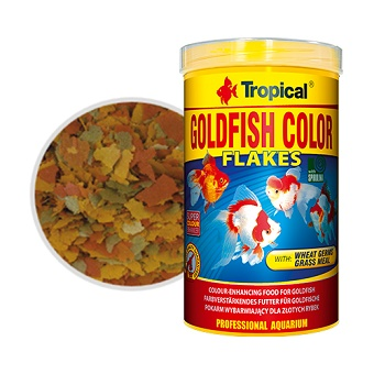 Tropical-Goldfish-Color