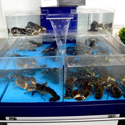 Lobster and mussels_102